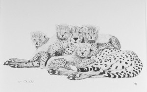 Cheetahs by Martin May